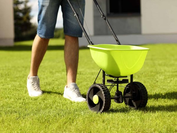 59452772 – picture of young man seeding grass in the backyard